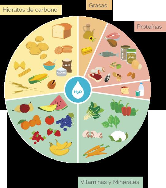 Componentes alimento