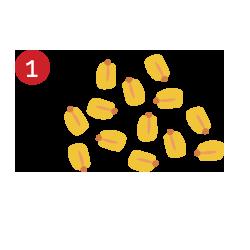 Selección maiz